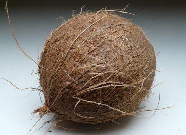 fibre coco
