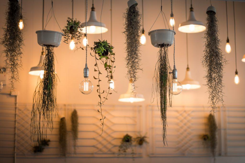 des plantes et des lampes au plafond