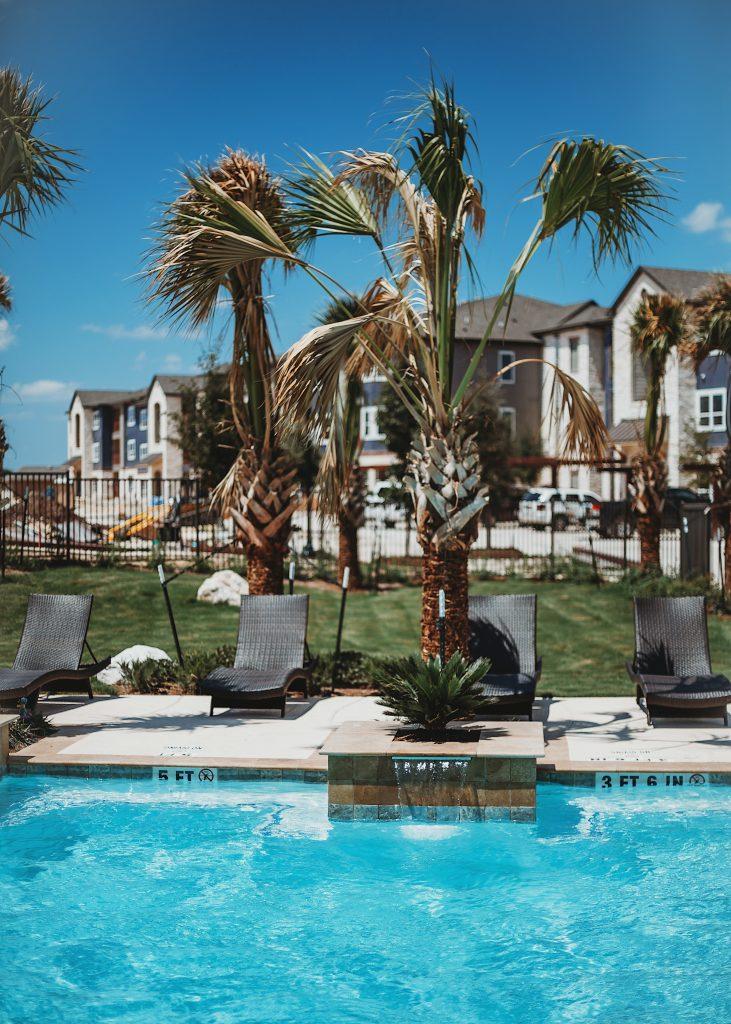 Piscine avec transats et palmiers